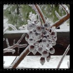 Random Thoughts-Ice Storm Day One